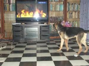 Ata-verbellt-Fernsehen-2