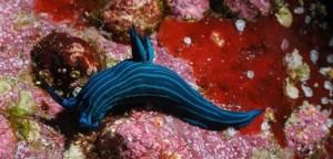 korallen-big
