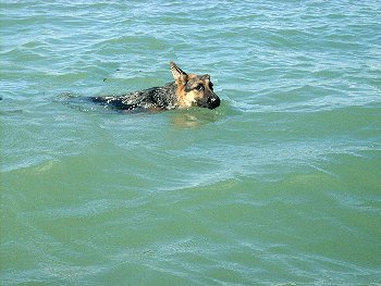 Ata-Schwimmerin