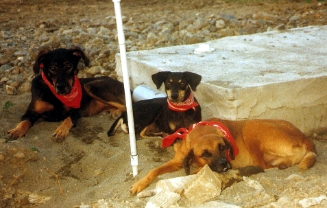 unsere_Hunde
