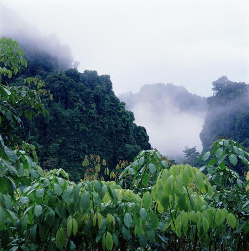 south park regenwald