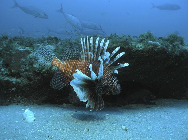 peixe-leao1_620