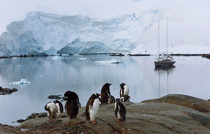 24_MHG_CIENCIA_PINGUINS