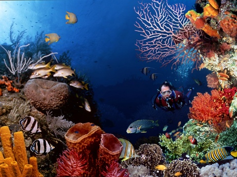 Underwater_Scuba_Diving