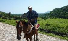 Papi-Pferd