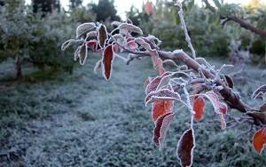 frost-sur