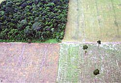 sojavsforest