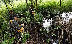 Brazilian soldiers pour insiticide again