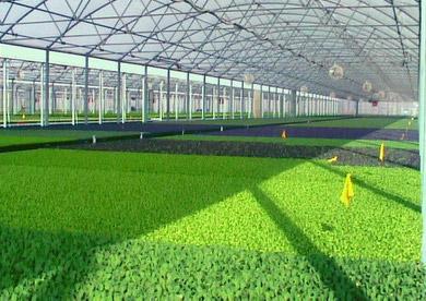 cultivo-en-invernadero