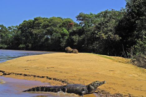 capybara_pantanal