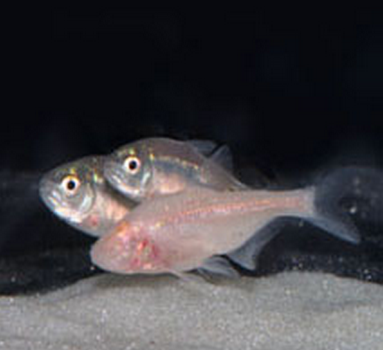 fishcuba