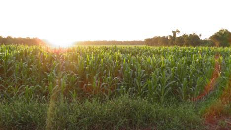 Landfläche in Argentinien