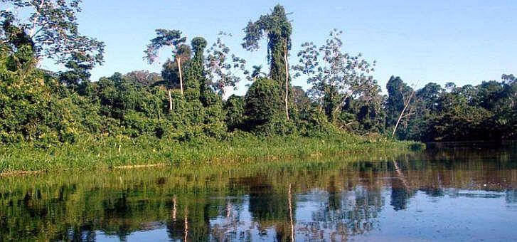 Yasuní-Nationalpark in Ecuador