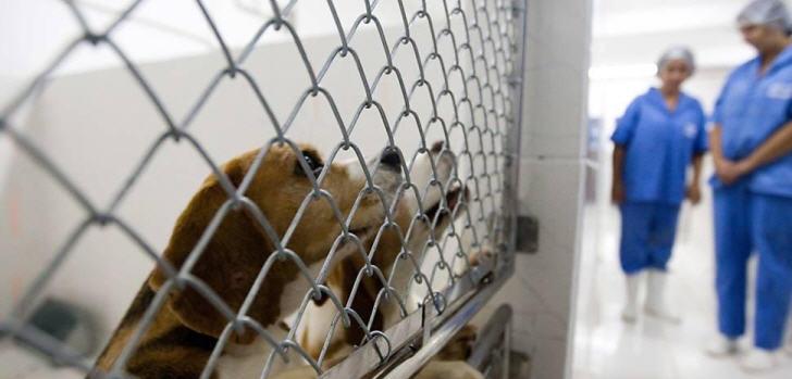 beagles-forschungseinrichtung-tierversuche