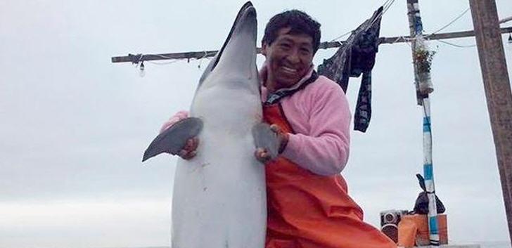 delfinmassaker