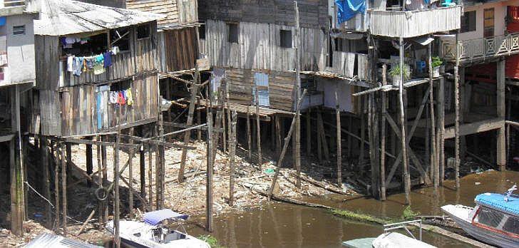 dengue-brut