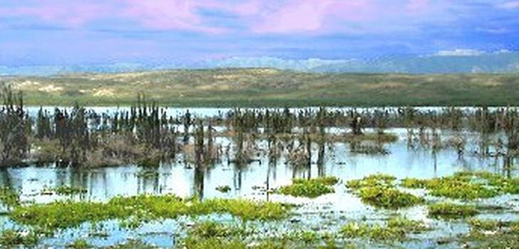 lago-domrep