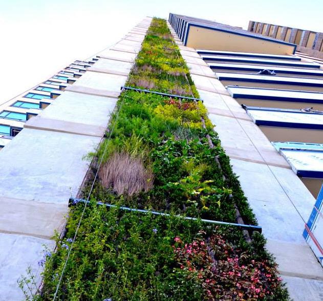 Neuer Trend in Kolumbien: Grüne Dächer und Fassaden sollen ...