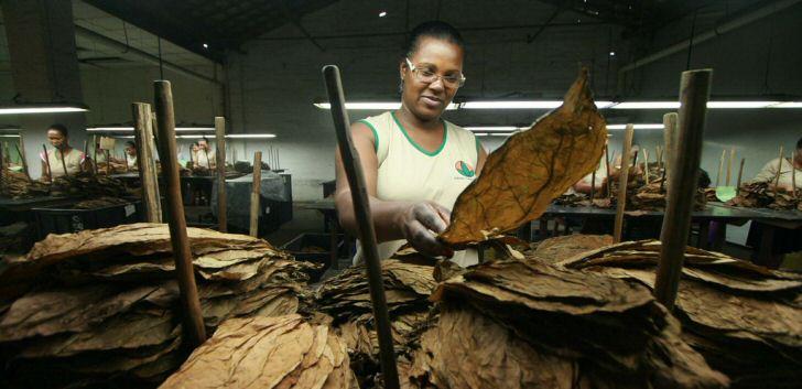 tabak-brasilien