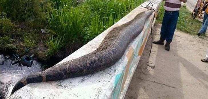 serpiente-gigante