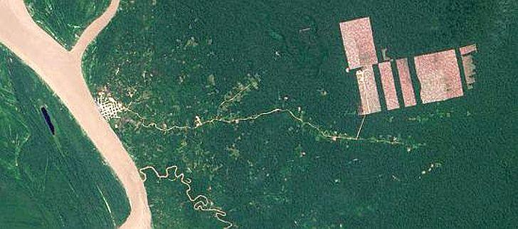 rodung-regenwald