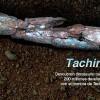 Venezuela: Paläontologen entdecken Knochen eines  Dinosaurier