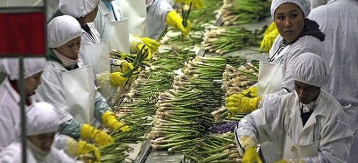 landwirtschaftsproduktion-peru