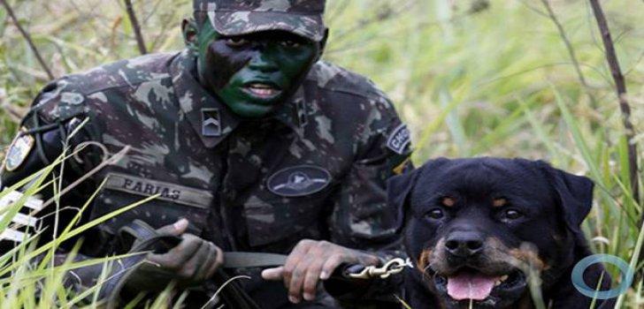 hunde-brasilien