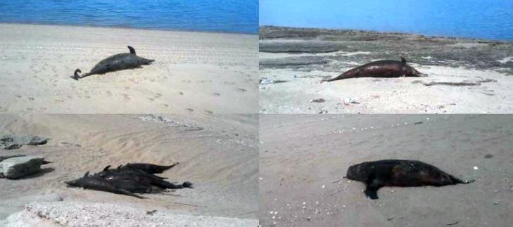 rotado-delfines