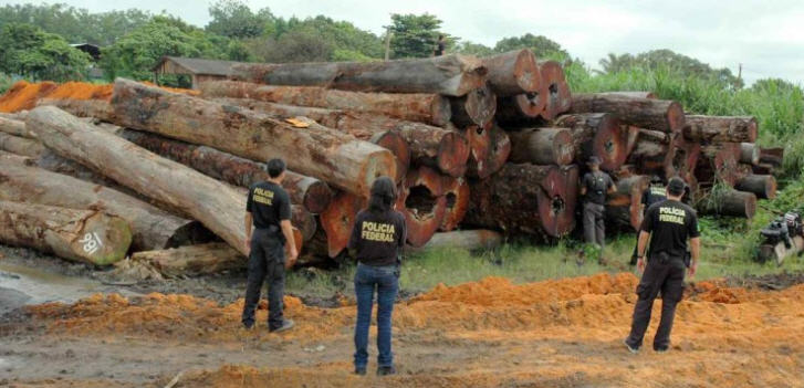 illegaler-holzeinschlag-brasilien