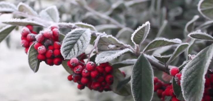 frost-brasilien