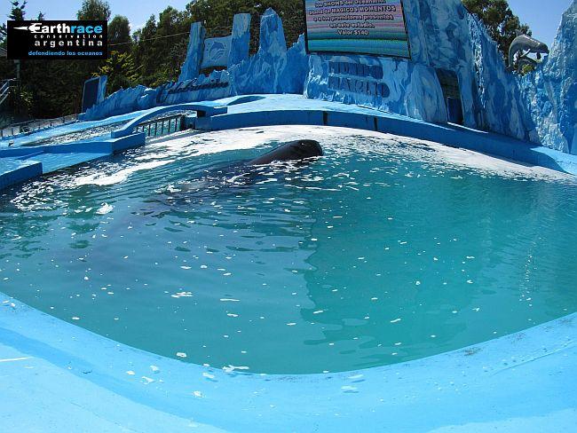 orca-argentinien-laeinamerika