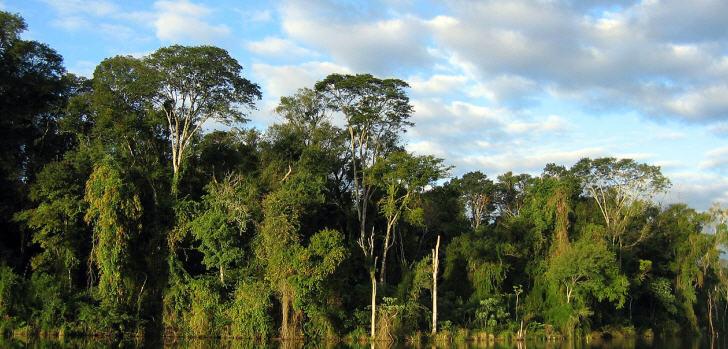 tropenwald
