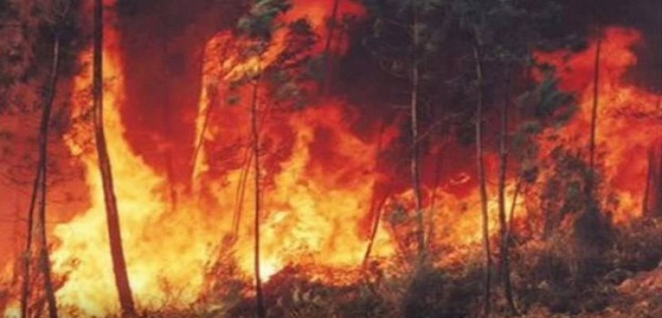 Brand Regenwald