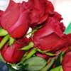 Rosen aus Ecuador: Tonnen von Blumen zum Valentinstag