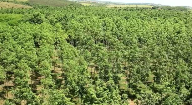 plantagen-brasilien