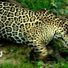 Venezuela: Tiere in den Zoos sterben an Hunger