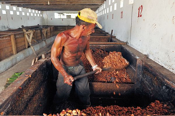 Kakao fermentieren