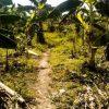 Bananenrepublik Venezuela: Im wahrsten Sinne des Wortes