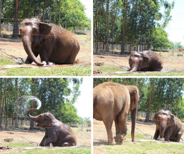 elefanten-supoper