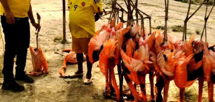 Den Flamingos wurden demnach nur die Brüste entfernt