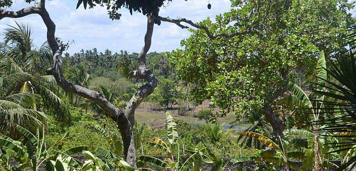 Der Atlantischer Regenwald ist eine Vegetationsform, die sich an der Ostküste Brasiliens von Rio Grande do Norte bis Rio Grande do Sul und ins Innere des Kontinents bis Goiás, Mato Grosso do Sul, Argentinien und Paraguay erstreck