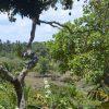 Fünf neue UNESCO-Biosphärenreservate