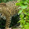 Aldi und Lidl sollen Jaguar-Wald nicht zu Holzkohle machen!