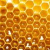 Ecuador: Projekt zur Vermehrung von stachellosen Bienen