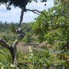 Zwölf Millionen Hektar Tropenwald verschwunden