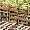Lidl-Rückzieher bei Fairtrade-Bananen
