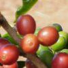 """""""Auf ein Tässchen"""": Kaffeebäuerinnen und Bauern leiden unter Armut"""