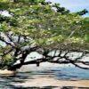 Kuba: Rückgang des Tourismus um mehr als neun Prozent
