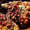 Fleisch bleibt Brandbeschleuniger bei Waldzerstörung